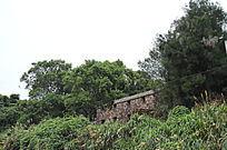 森林里的老房子