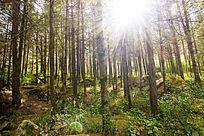 森林植被绿树