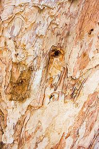 树皮背景纹理