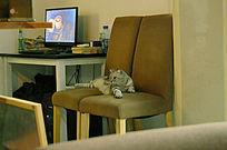躺着椅子上的小猫