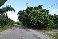 乡村林间摄影