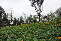 小区园林景观花朵摄影图