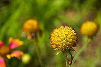 黄色花卉特写