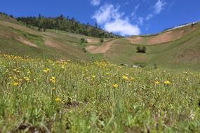 山坡上野花盛开