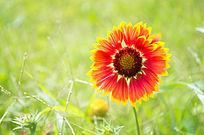 阳光下的花卉