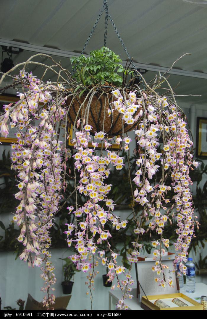 原创摄影图 动物植物 花卉花草 园艺吊篮花卉