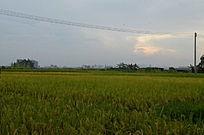 稻田风景图片