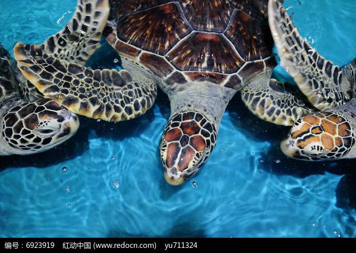 海龟怎么画步骤