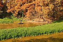 湖泊秋色树林风景图片