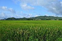 绿油油的田野风景图片