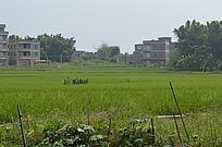 田野建筑风景图片