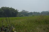 田野田园景色图片