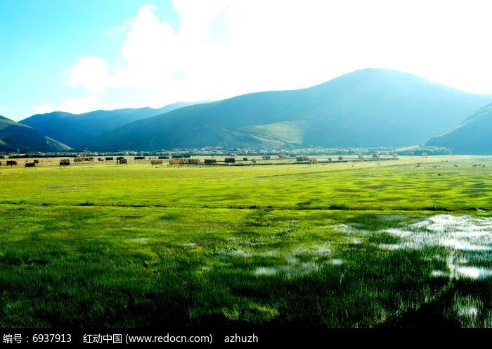 淡绿色的草原