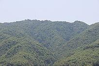 哀牢山原始森林群局部