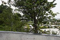 笔架山森林公园广场植被