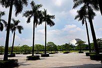 公园广场绿化