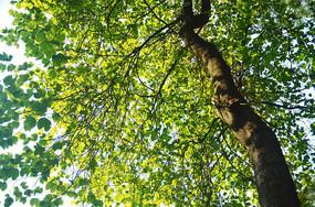 光影绿叶风景图片