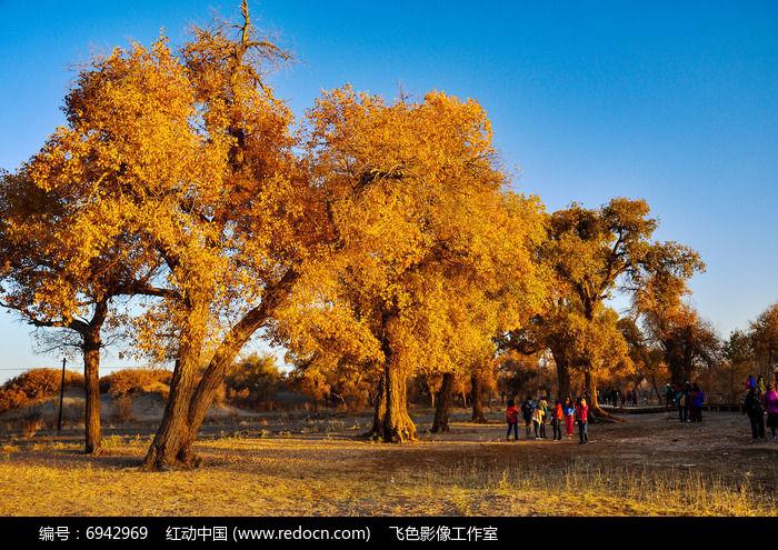 胡杨树图片图片,高清大图_森林树林素材