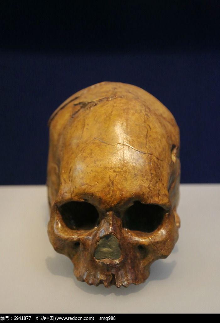 山顶洞人头骨化石