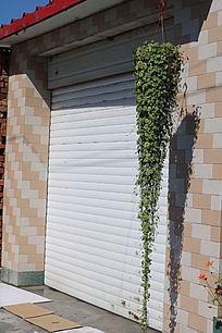 一盆垂吊的绿色植物