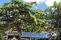 巴厘岛街道