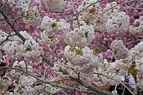 争奇斗艳的花