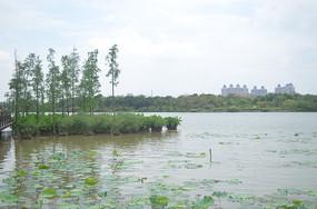 湖景春色荷塘风光图片