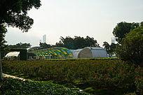 琶洲有轨电车站和从草坪