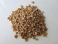 丰收的麦子