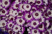 花卉世界图片