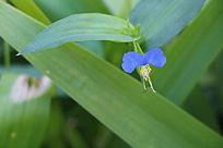美丽的蓝色花朵