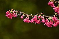 美丽中国红花卉特写