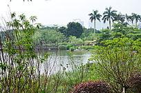 公园湖泊绿化风景图片