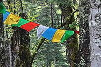 原始森林中的旗子