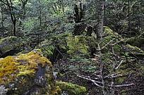 原始森林中美丽景色