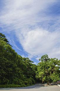 广场树木与蓝天白云