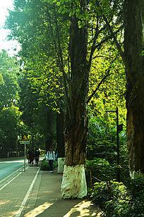 光影树林绿道