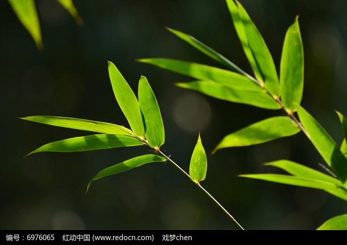 原创摄影图 动物植物 树木枝叶 光影竹叶图片
