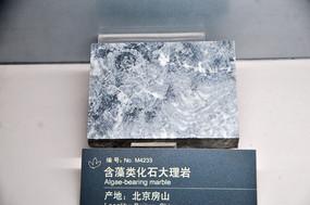 含藻类化石大理岩