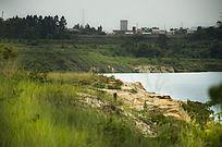 黄色山崖上盛放的野生杜鹃