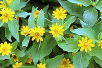 黄色小花朵