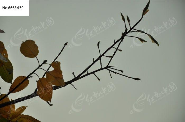 原创摄影图 动物植物 树木枝叶 枯黄的树枝  请您分享: 红动网提供