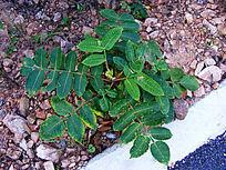 路边绿色植物