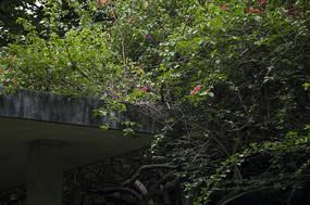 密密麻麻爬满亭子的杜鹃与鲜艳的杜鹃花