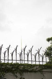 爬满藤蔓的钢铁围墙