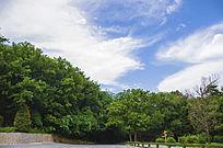 千山公路两侧树木与蓝天白云