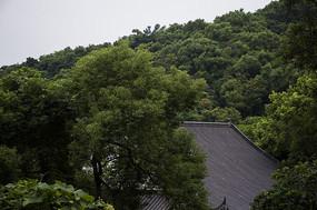 森林中的佛子禅院