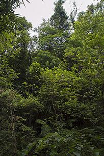 山腰上的原始森林