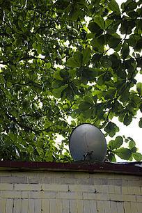 树荫下的电视天线接收器