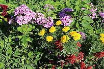 五颜六色的花